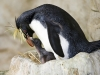 pa_pinguin2